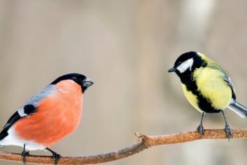 The Joy of Bird Watching